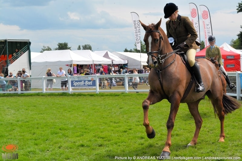 Horses at Royal Norfolk Show picture by Andreas Yiasimi